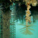 Biodiversité marineet extension du Port de Calais