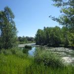 Zoom sur… la renaturation écologique de la gravière d'Arnas.