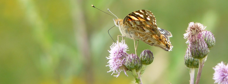 Fête de la nature : comment sauver la biodiversité.