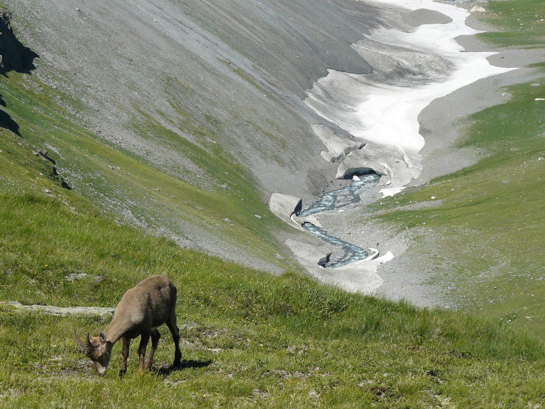 Le nouveau plan biodiversité