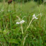 Biodiversité et normalisation