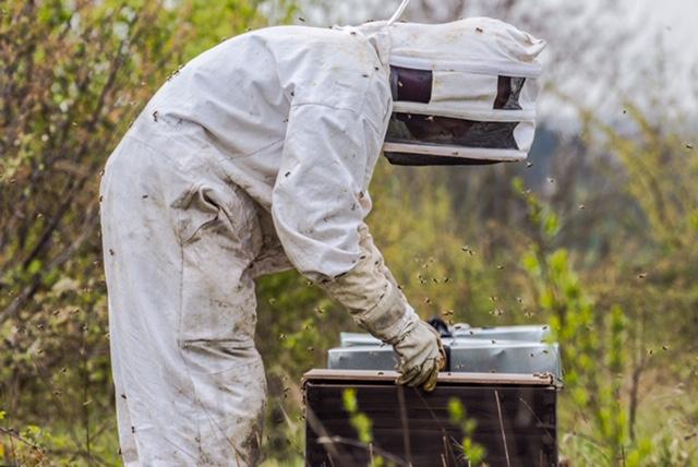 Les abeilles agissent tels des drones pour la préservation de l'environnement.