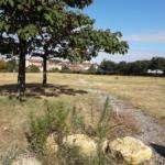 Agro-écologie et friches urbaines à Pierre-Bénite