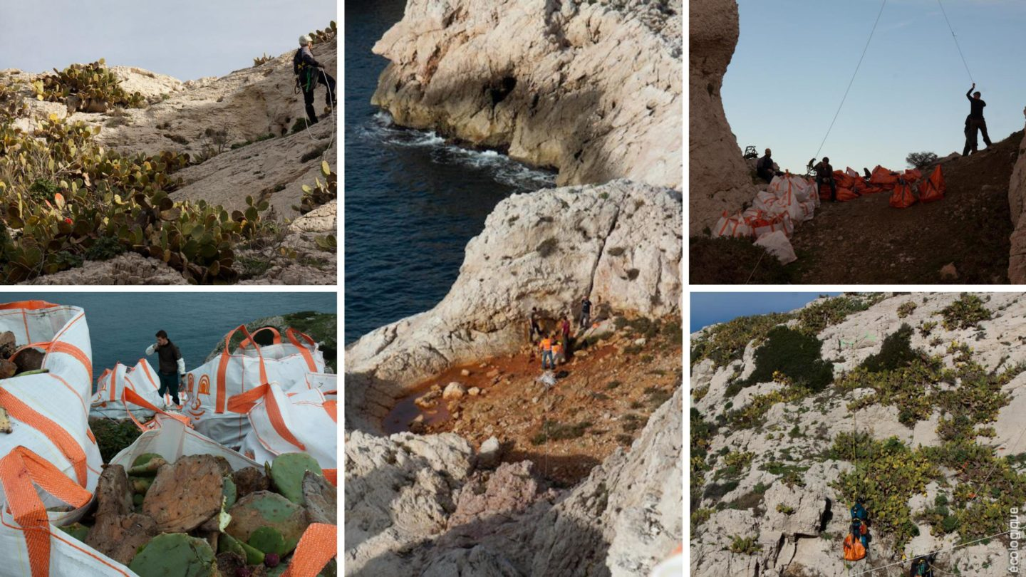 Chantier d'arrachage d'EVEE sur le Parc National des Calanques