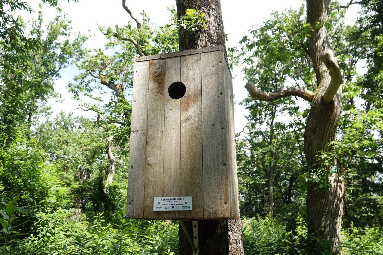 Des nichoirs pour la faune saproxylophage