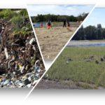 Réhabilitation écologique de l'ancienne décharge de Bordes
