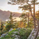 Impacts du changement climatique sur la re végétalisation : retour d'expérience de Eric Dedonder