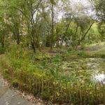 Le Jardin naturel Pierre-Emmanuel : un espace écologique créé dans Paris.