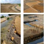Restauration écologique d'un cours d'eau : quinze ans après