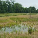 Travaux de valorisation écologique d'une zone d'expansion de crues.